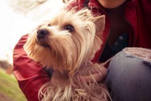 宠物狗消化不良的表现是什么宠物消化不良如何应对